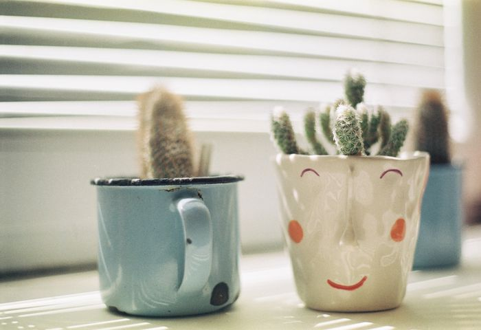 Cute cups make for good pots